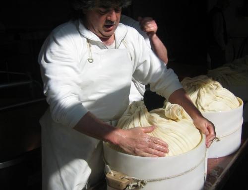 Parmigiano Reggiano producer in the Colli Bolognesi