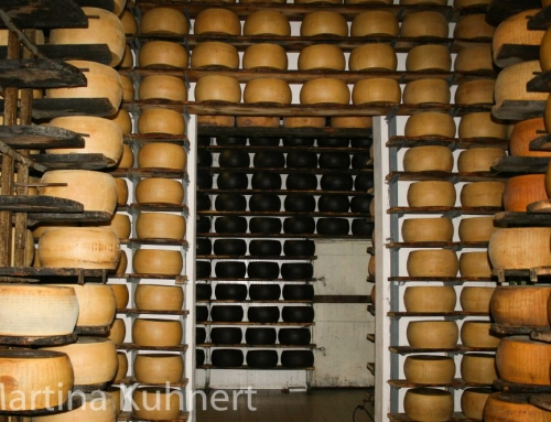"The ""King of cheese"" Parmigiano Reggiano – tasting and more"